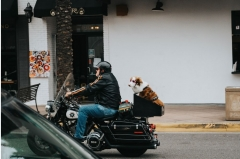 Can I ride with my pet on a motorcycle?